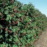 Агротехніка (загальні відомості)