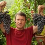 Виноград Козачок